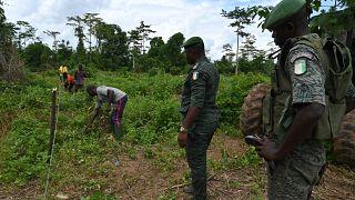 Côte d'Ivoire :  la forêt de la Téné comme rempart contre la déforestation