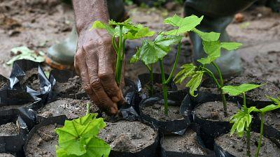 Ghana : cinq millions d'arbres pour une campagne de reforestation