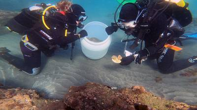 Scientists restore sea anemone populations in Andalusia, Spain