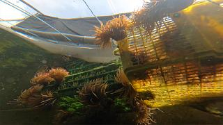 """""""Mini-ecosystem"""" approach reduces aquaculture waste"""
