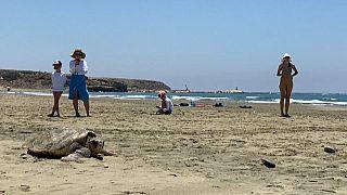 На Кипре отдыхающих призывают не мешать черепахам откладывать яйца