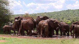 Le Kenya organise un festival de dénomination des éléphants