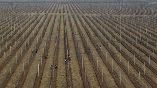 Nordkoreanische Arbeiter auf einer Apfelplantage, Bild von 2012
