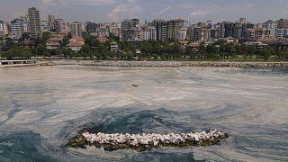 Marmara Denizi'nde müsilaj sorunu