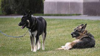 """""""تشامب"""" كلب جو بايدن"""