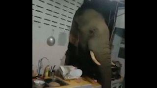Жители Хуахина сняли на видео, как голодный слон вломился к ним в дом