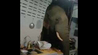 Elephant breaks into kitchen wall looking for snacks