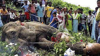 Vonat által elütött elefántot gyászolnak a nyugat-bengáliai Jalpaiguriban