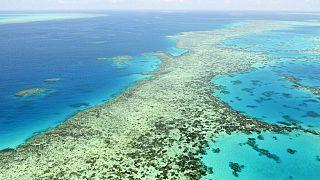 """Australie : la Grande Barrière de corail """"en danger"""", selon l'Unesco"""