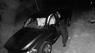 الدب المشبوه يقتحم السيارة
