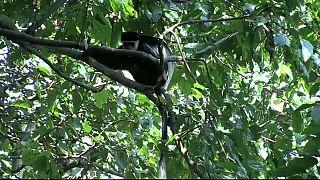Le Gabon reçoit des fonds pour réduire la déforestation