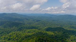 Gabon is the first African country to get paid for reducing carbon emissions
