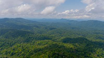 Gabon's rainforests absorb a total of 127 million tonnes of CO2 every year.