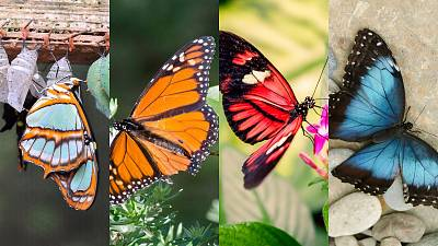 Colombia now has the most species of butterfly in the world