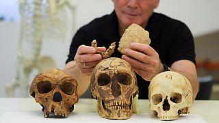 """Profesör Israil Hershkovitz elinde """"Nesher Ramla""""ya atfedilen iki parça fosilleşmiş kemik tutuyor"""