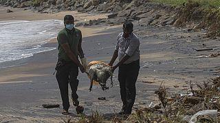 Környezeti katasztrófa Srí Lanka partjainál