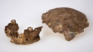 The human ancestor mandible and skull discovered in Neher Ramla, Israel