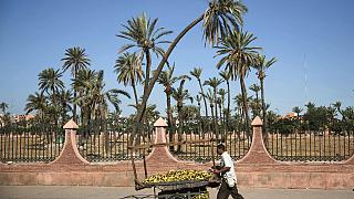 vendeur de bananes, à Marrakech