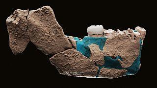 A Neser Ramla ásatáson talált előember állkapcsának rekonstruált darabja