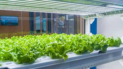 Nanotechnology and AI in agriculture could help solve global food insecurity.