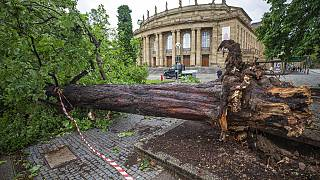 Un albero caduto davanti all'Opera di Stoccarda in Germania