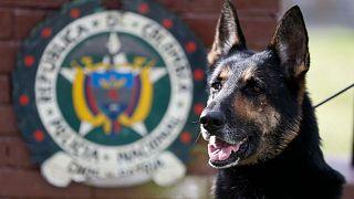 کشف شش تن کوکائین در کلمبیا