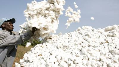 Togo wants to re-launch its race for cotton