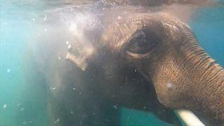 Asian elephants at Oregon Zoo enjoy the pool to beat US heatwave