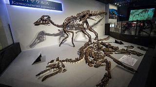المتحف الوطني لـ الطبيعة والعلوم في طوكيو، اليابان، 6 سبتمبر 2019