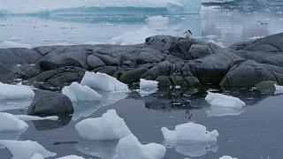 Antarctica is the coldest, driest and windiest place on Earth.
