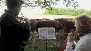 Teheneknek zenélnek dán muzsikusok