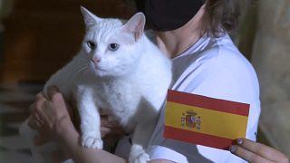 El gato Aquiles, oráculo de la Eurocopa en San Petersburgo
