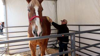 بيغ جيك، أطول حصان في العالم