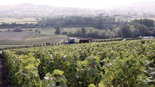 Архивное фото из французского региона Шампань