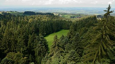 A study suggests planting more trees in Europe could increase rainfall, which could help slow down the pace of climate change.
