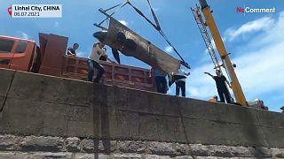 إنقاذ 12 حوتا عالقا على شاطئ في شرق الصين