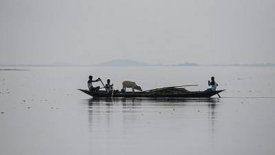 A boat carrying men and a cow in the river Brahmaputra in Morigaon district of Assam, India, Saturday, Aug. 1, 2020.