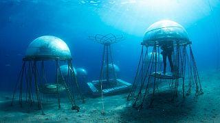 Su altı çiftliği Nemo's Garden