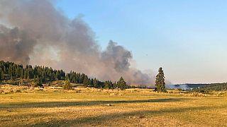Kanada'da aşırı sıcaklar orman yangınlarını tetikledi