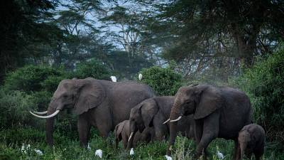 Kenya expresses concerns over UK elephant 'rewilding' project