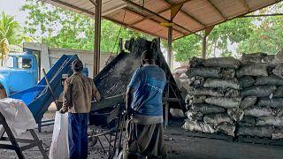 Hasta ahora, la producción es modesta: 600 toneladas el año pasado (todas destinadas a la exportación), y para este año la meta es 700 toneladas.