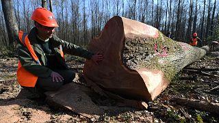 Fransa'da ormancılık sektörü