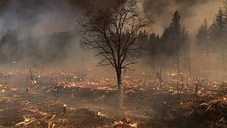 Burnt ground, scorched timbers