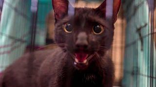 El gato y sus dueños vivían en el noveno piso del edificio colapsado. Pudo escapar porque le dejaron la puerta abierta, asegura la alcaldesa Levine Cava.