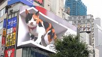 Giant 3D cat becomes Tokyo's latest photo hotspot