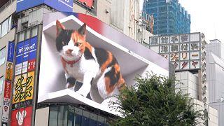 ویدئوی گربه غول پیکر سهبعدی در توکیو
