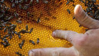 Valaczkai Tamás méhész a mézet ellenőrzi egy méhkaptár keretében nagyszénási méhészetében 2020. április 25-én.