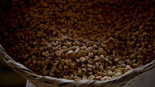 قهوه محصول برزیل