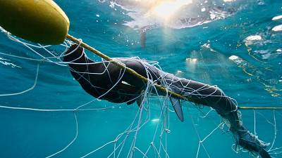 Nets and bait hooks are installed in almost one hundred beaches across the coasts of Queensland and New South Wales