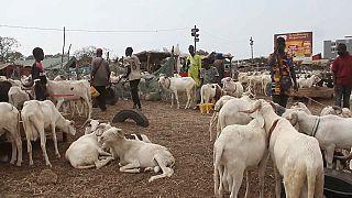 Sénégal : la Tabaski menacée par le prix du mouton